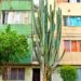 Medellin cactus house street photo